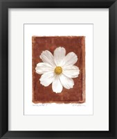 Cosmos on Red I Framed Print
