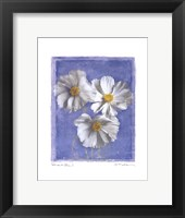 Cosmos on Blue I Framed Print
