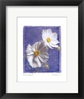 Cosmos on Blue II Framed Print