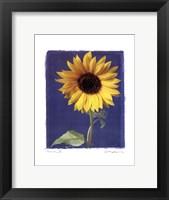 Summer II Framed Print
