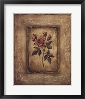 Framed Savin Rose