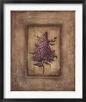 Framed Grand Savin Lilac