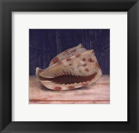 Framed Brown Spotted Shell