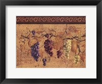 Framed Grape Collection