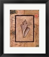 Wonder Shell Framed Print