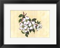 Framed Spring Dogwood II