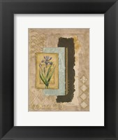 Framed Metallic Iris II