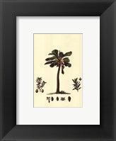 Tropical Palms III Framed Print