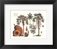 Tropical Fruits I Framed Print