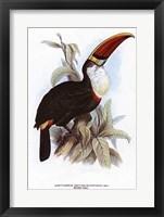 Framed Parrots 3 of 3 (Toucan)