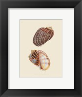 Framed Chelsea Shells-3 of 6