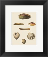 Framed Shells-1 of 8