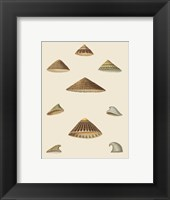 Framed Shells-3 of 8
