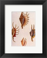Framed Shells-8 of 8