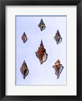 Framed Shells-3 of 4