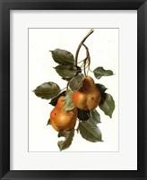Framed Fruit-3 of 10 (Pears)