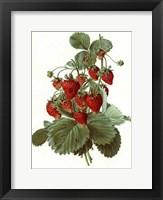 Framed Fruit-4 of 10 (Strawberries)