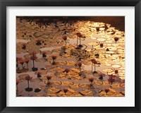 Framed Lotus Pond