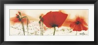 Framed Coquelicots Au Vent IV