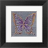 Framed S. Wings