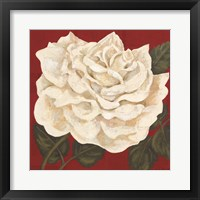 Framed Rosa Blanca Grande I