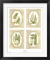 Framed Four Fancy Ferns