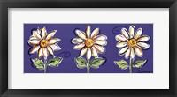 3 White Daisies Framed Print