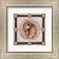 Framed Mollusk Shell II