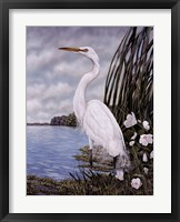 Framed Great White Egret