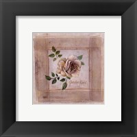 Framed Garden Rose