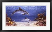 Framed Dolphin World