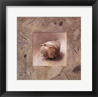 Shell II Framed Print