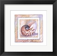Framed Bordered Shell-Nautilus