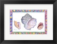 Framed Turbo Conch & Harp Shells