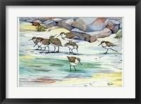 Framed Shoreline Sandpipers