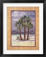 Framed Mediterranean Fan Palm