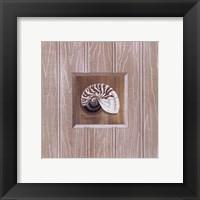 Beadboard Nautilus Framed Print