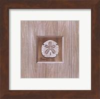Framed Beadboard Sanddollar