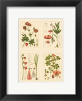 Framed Miniature Botanicals II
