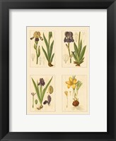 Framed Miniature Botanicals III
