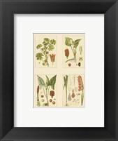 Framed Miniature Botanicals IV