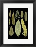 Framed Ferns on Black II