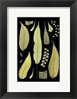 Framed Ferns on Black III