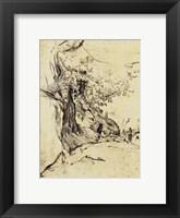 Framed Sepia Tree Study