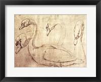 Framed Sepia Swan Study