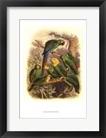 Framed Tropical Birds I