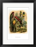 Framed Tropical Birds II