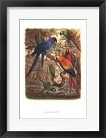 Tropical Birds III Framed Print