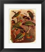 Framed Tropical Birds IV