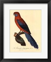 Framed Parrot, PL 78